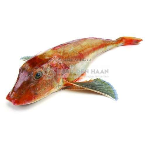 Poon (hele vis)