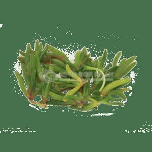 zeebanaantjes